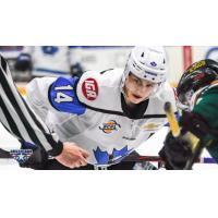 Forward Jack Barnes with the Penticton Vees