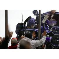 Tri-City Storm celebrate a goal along the boards