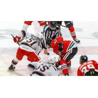 Rockford IceHogs face off with the Grand Rapids Griffins
